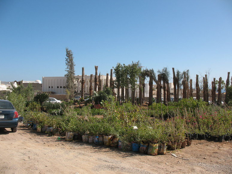 Маленький рынок растений