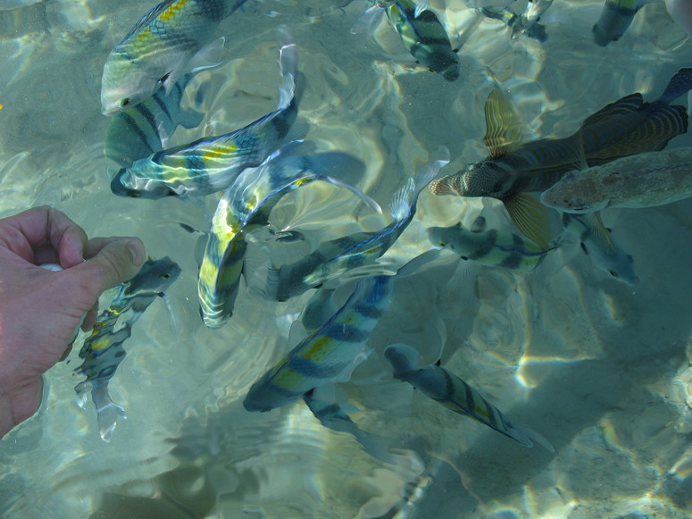Кормёжка рыбок